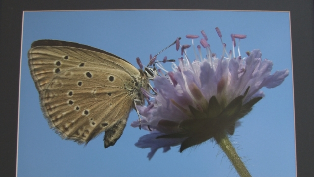 V  KD je nainštalovaná výstava Motýle Slovenska
