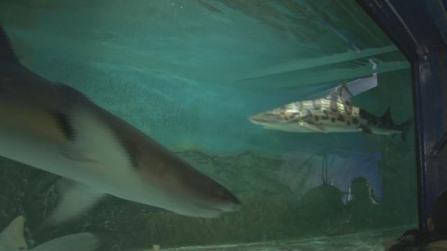 Putovná výstava Živé žraloky