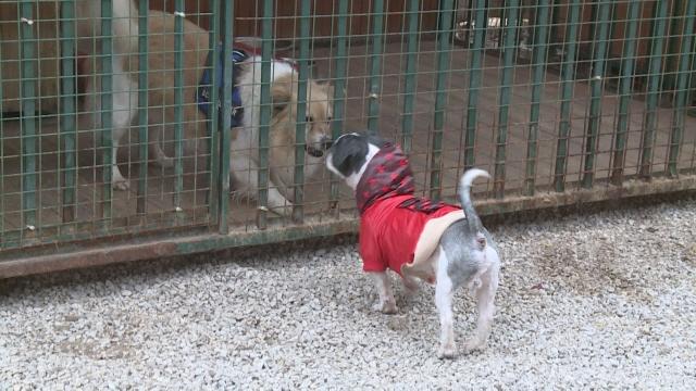 Útulok pre psov organizuje aukciu