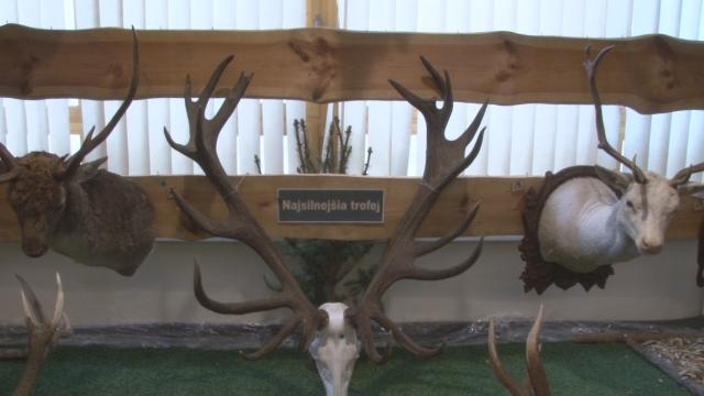 Výstava poľovníckych trofejí